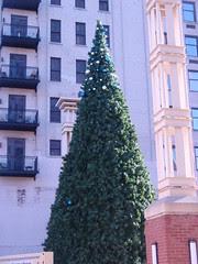 undecorated tree