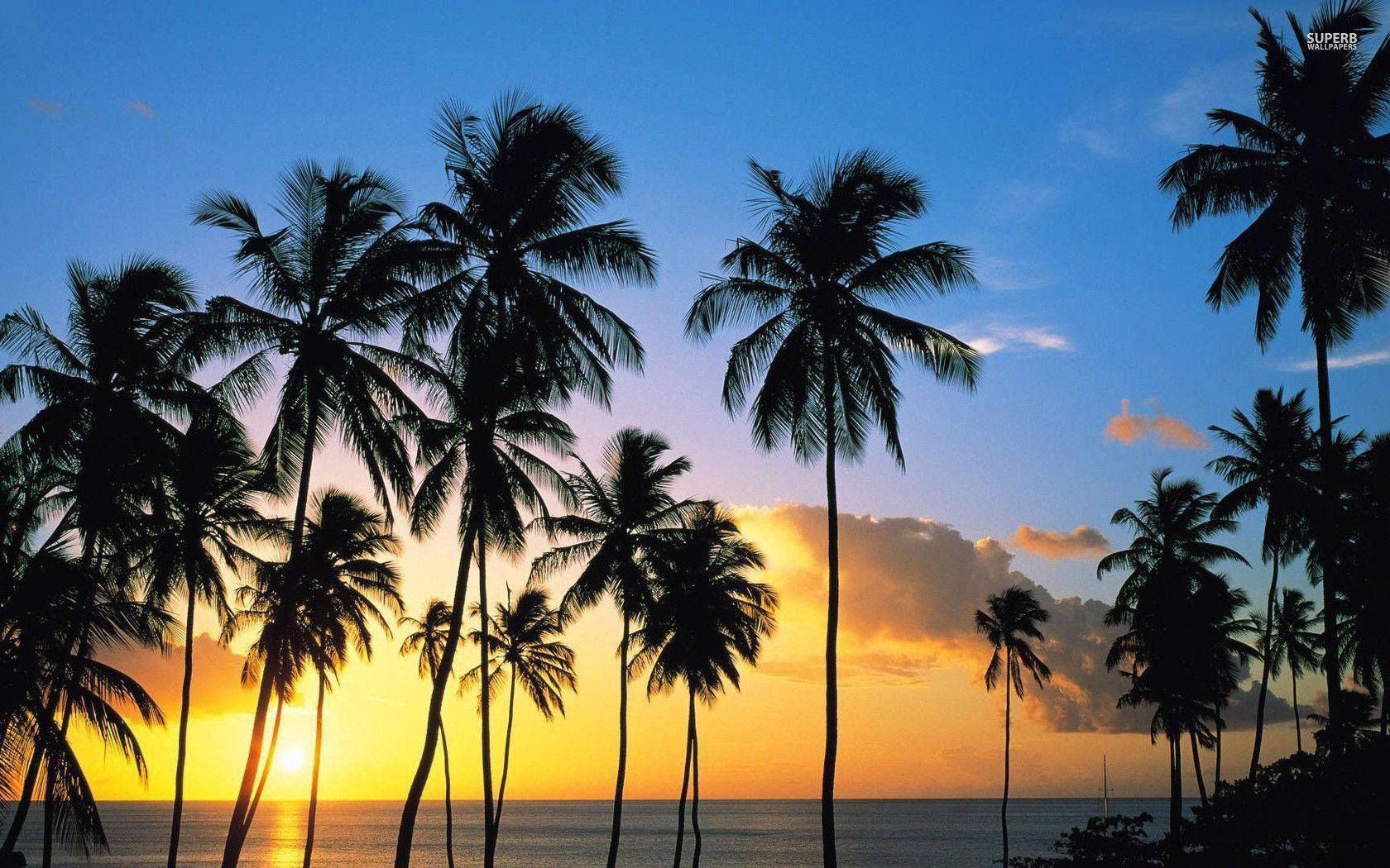 Palm Tree Wallpapers - Wallpaper Cave