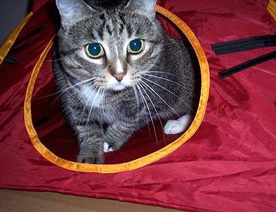 cat_tentLR2