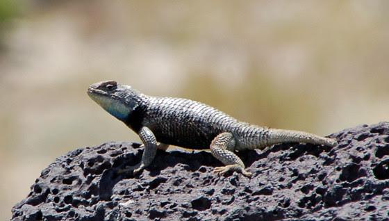 4green-lizard!.jpg