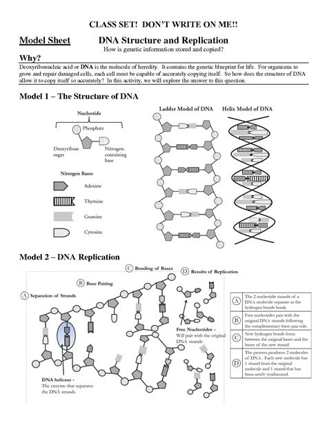 Free PDF dna-structure-and-replication-pogil-answers Doc ...