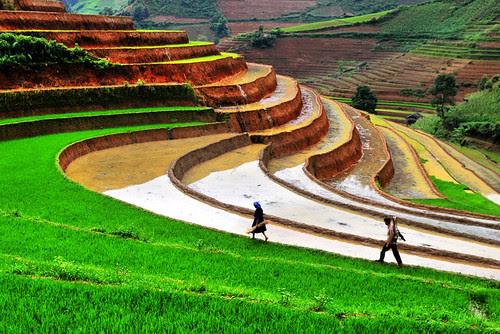 Natural Beauty of Vietnam