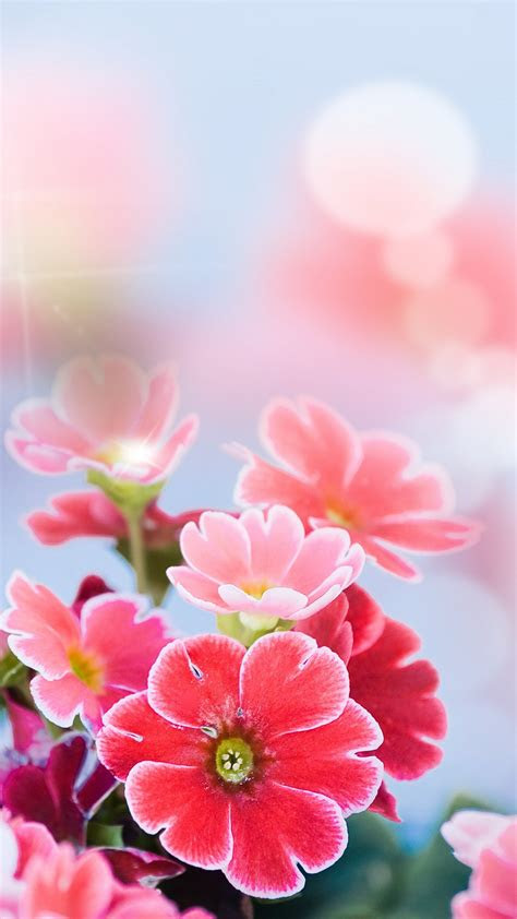 macro flowers tender iphone wallpaper iphone wallpapers