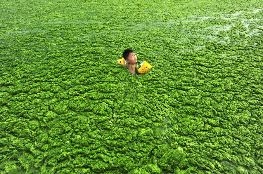 A boy swims in the algae-filled coastline of Qingdao, Shandong province.