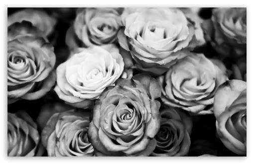 Roses Black And White 4k Hd Desktop Wallpaper For 4k Ultra Hd Tv