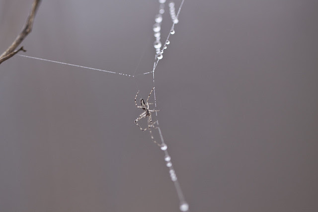 web drops and spider2
