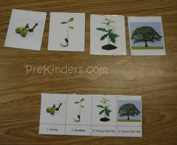 tree life cycle cards