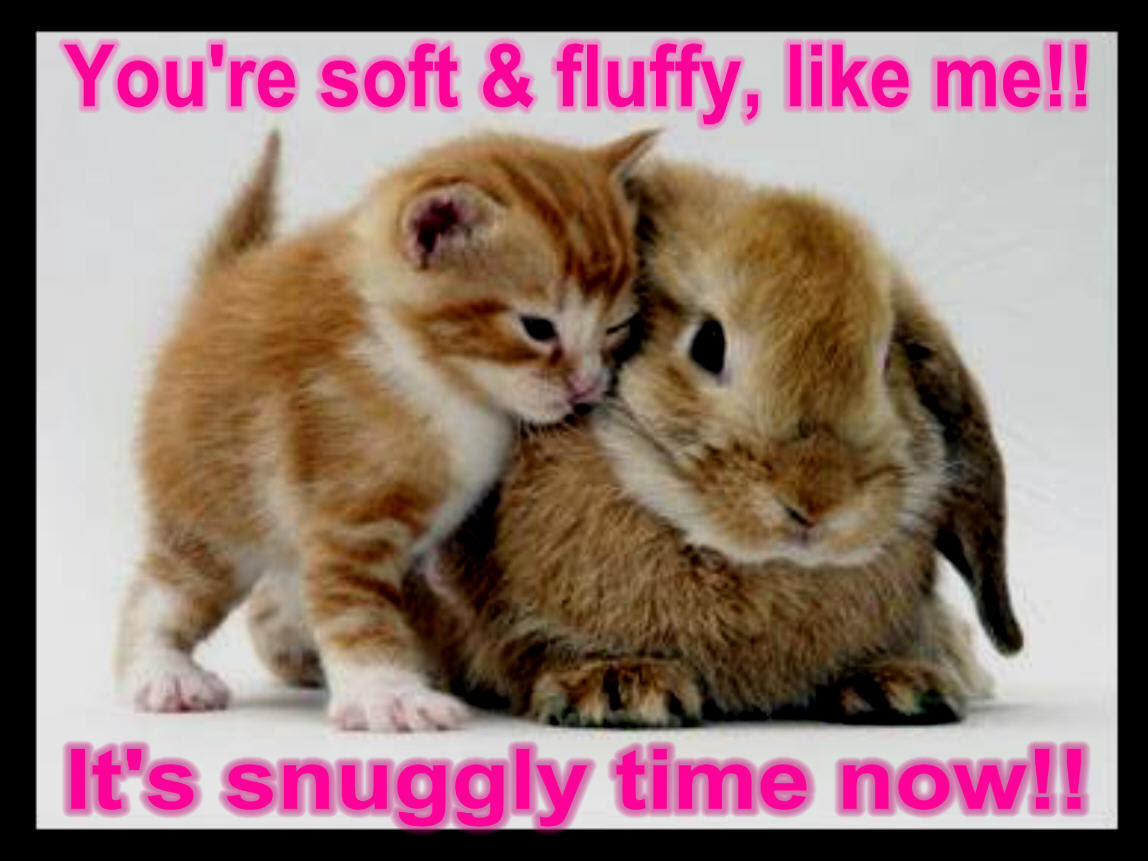 Funny Animals With Quotes 1 Desktop Background