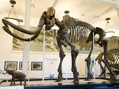 AMNH Mammoth