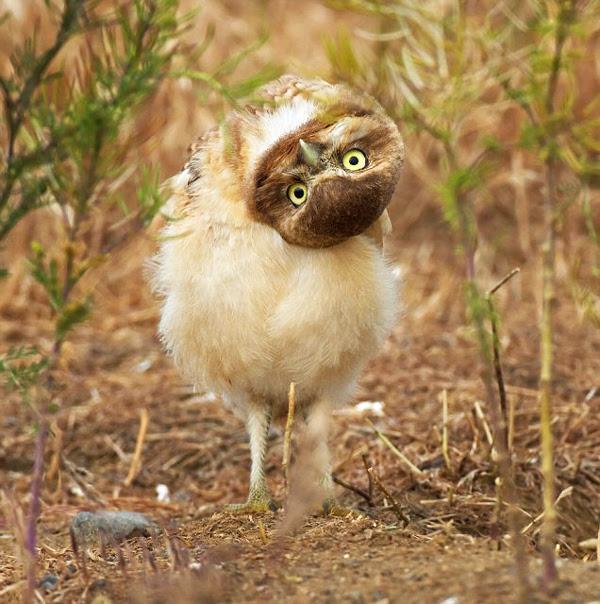 perierga.gr - Αστεία πτηνά... εν δράσει!