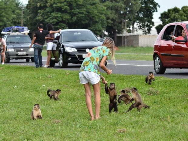 Motoristas e curiosos aproveitaram para dar comida aos macacos (Foto: Valdivo Pereira/Folha da Região)