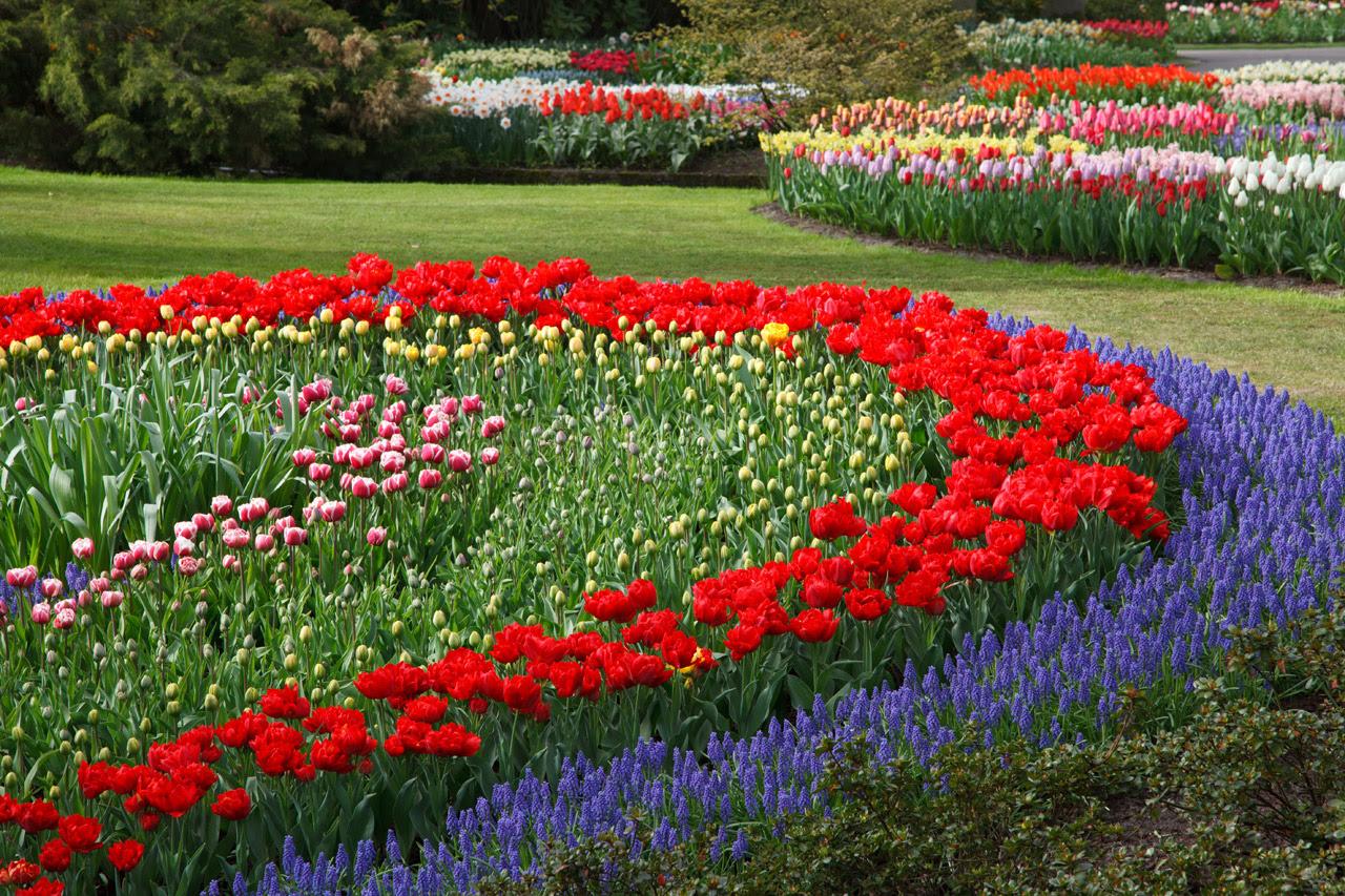 Flower Garden by Petr Kratochvil