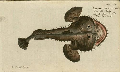 Lophius piscatorius