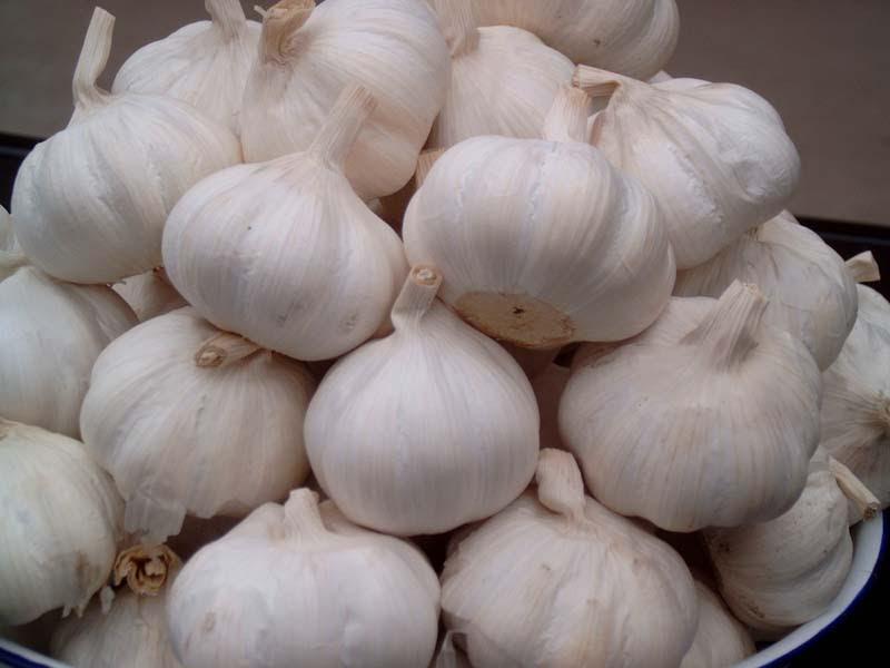 khasiat, kelebihan, kebaikan, makan bawang putih, sebab, kenapa, risiko, membantu, penyakit, tubuh, sihat
