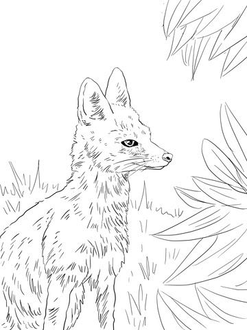 kit fox portrait coloring page  free printable coloring pages