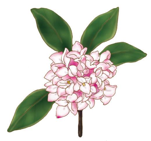 猫絵描きneupyの花のイラストと銀魂ヘタレらく描き ラストニャンズ
