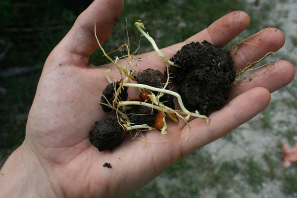 How to Germinate Peach Pits (and Why You Should) - The ...