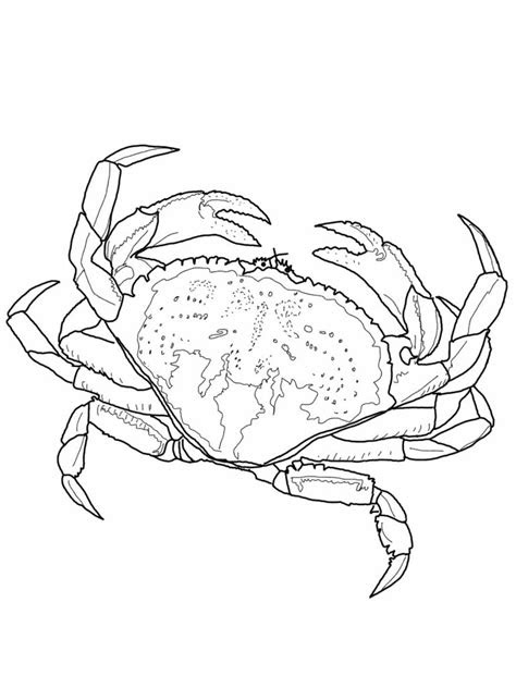 printable crab coloring pages  kids