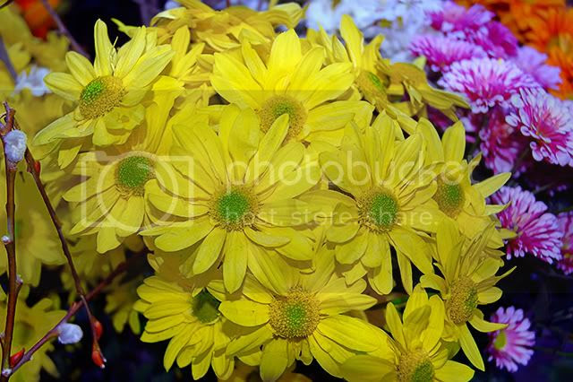 Photo of Yellow Flowers at Ramblas Stall in Barcelona, Spain [enlarge]
