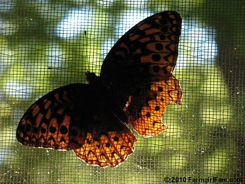 Butterfly on Screened Porch