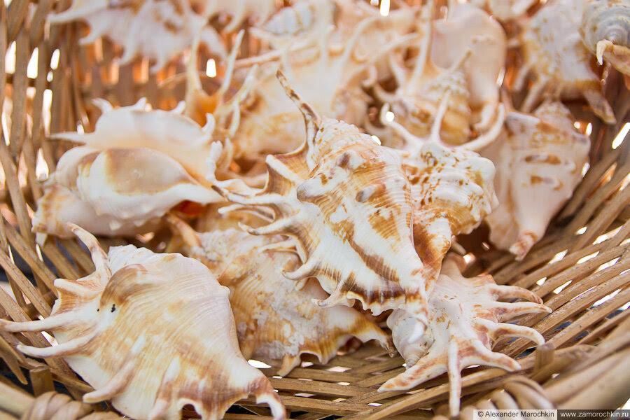Морские раковины в корзине в музее ракушек Корфу