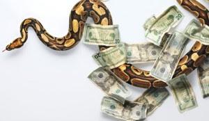 money snake