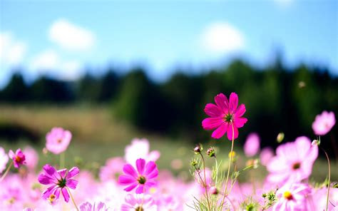 computer backgrounds flowers  images