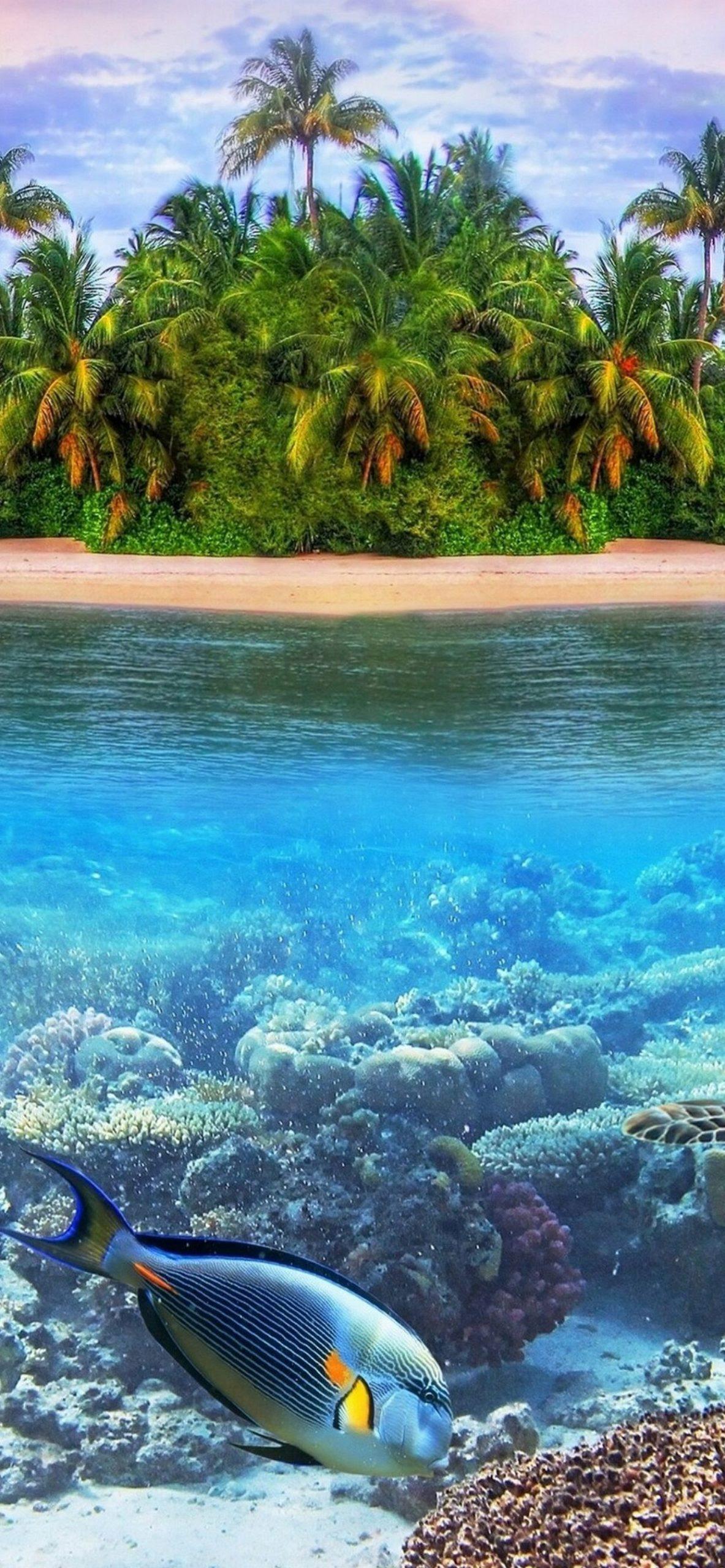 熱帯海のパラダイス島iphone Xs Max自然壁紙 1242 2688 Iphoneチーズ