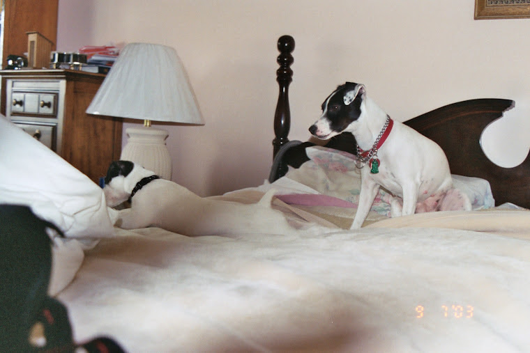 """Princes(right) looking over Liberty in my parent""""s room"""