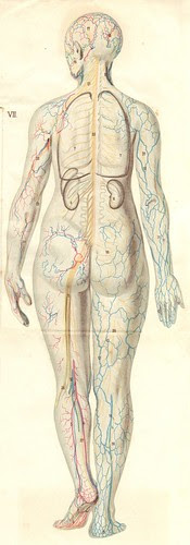 anatom37 7