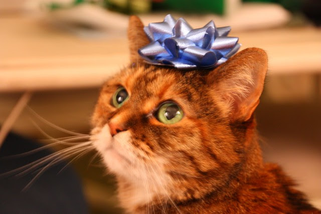 Mollie's Christmas Crown