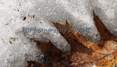 an oak leaf melting into the winter snow