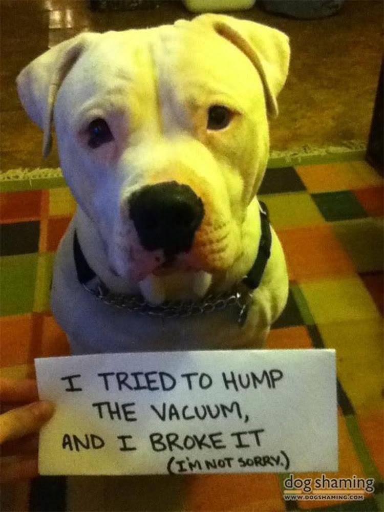 dog shaming 23 32 Hillarious Public Shaming of Dogs