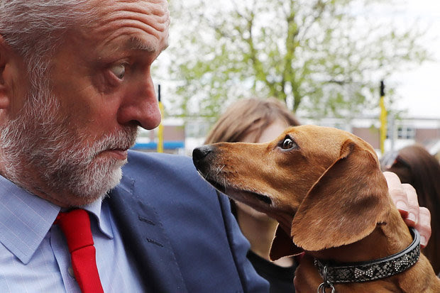 Jeremy Corbyn with dog