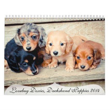 Dachshund Puppies 2014 Wall Calendars