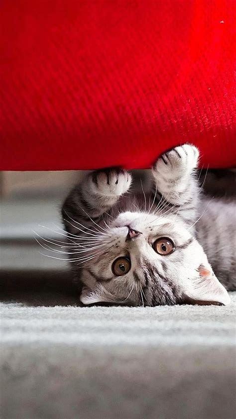 wallpaper iphone  cat   full hd