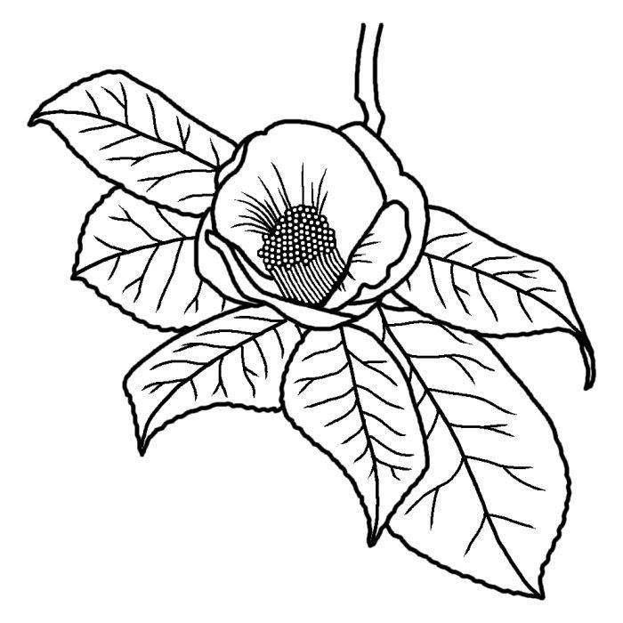 ツバキ椿白黒長崎県の木都道府県の木花鳥イラスト素材