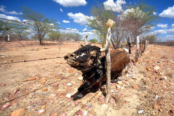 Seca recorrente nos últimos anos justificou decreto de calamidade pública em 153 municípios