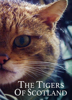 Tigers of Scotland, The
