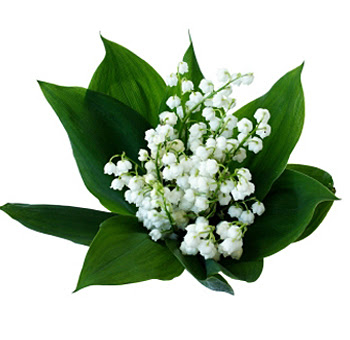 Order Wholesale Lily Of The Valley Flower At Bulk Prices