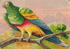 oiseauchromos 7