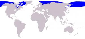 1024px-Cetacea_range_map_Beluga.png
