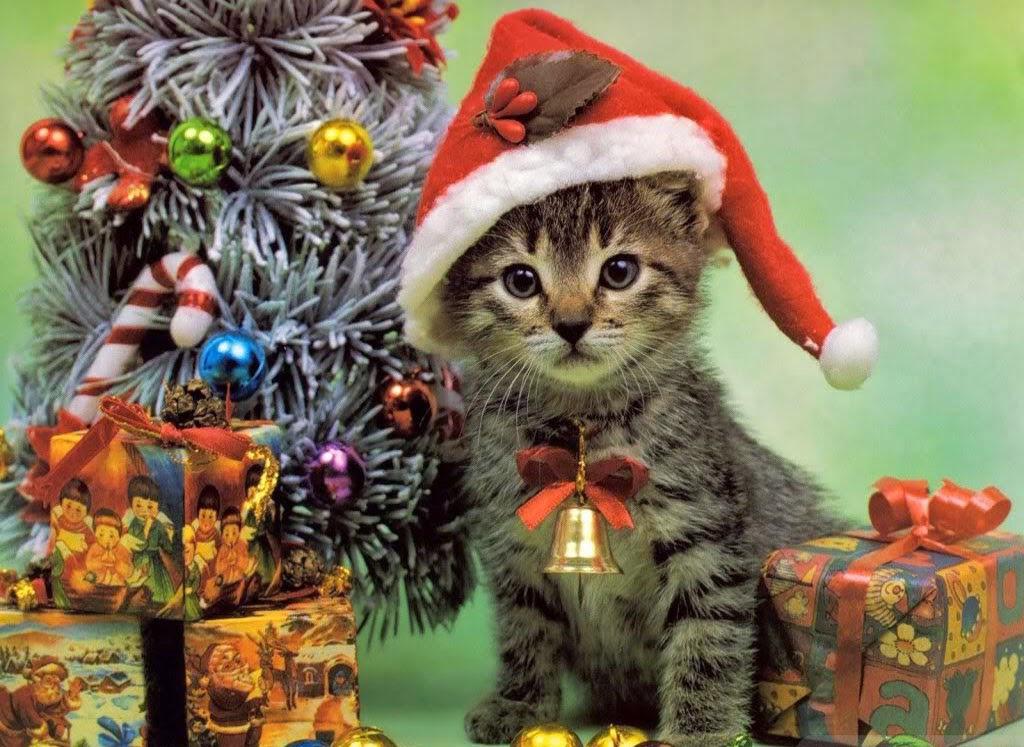 Weihnachtsbilder Tiere - Weihnachtsbilder - kostenlos ...