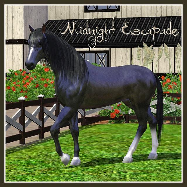 Midnight Escapade - covershot 02