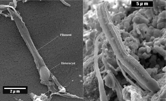 Cientista da NASA diz ter encontrado vida extraterrestre em meteorito
