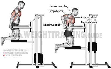 machine assisted triceps dip exercise instructions  video