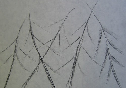 Trees drawings by Matthew Felix Sun 2