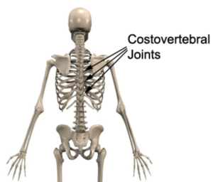 Slipped Rib Fit For Life Vaughan Chiropractor Physiotherapy