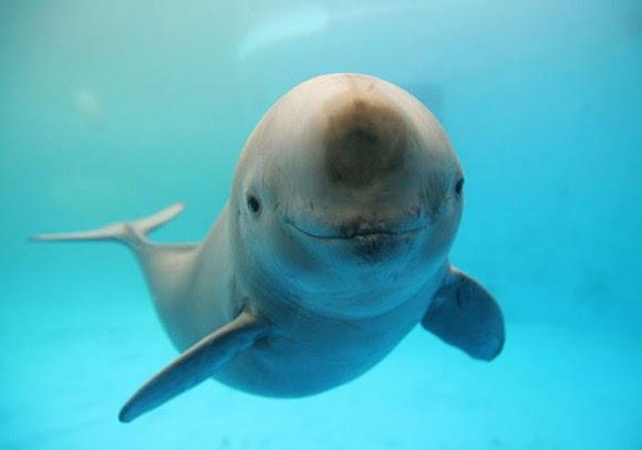 cute-smiling-animals-35