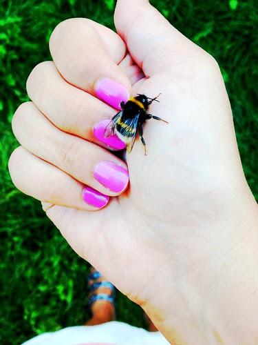 my little bumblebee friend